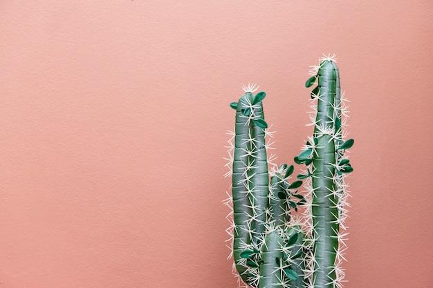 淡粉色背景上的仙人掌