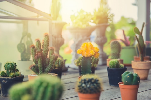 Cactus plant home decoration, group of small cactus pots hipster lifestyle house living garden corner.
