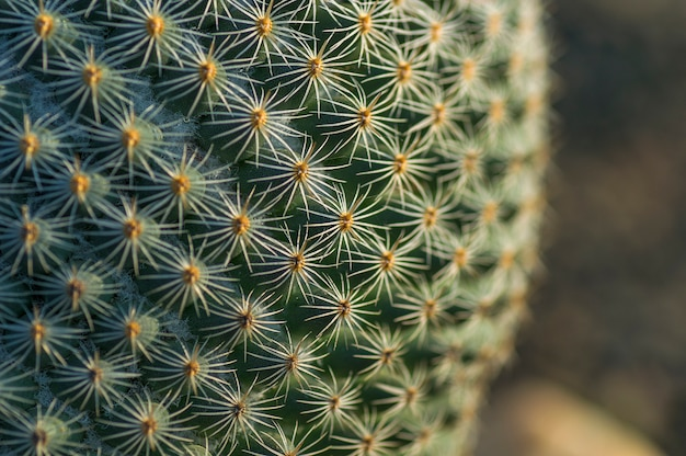 公園のサボテンの植物