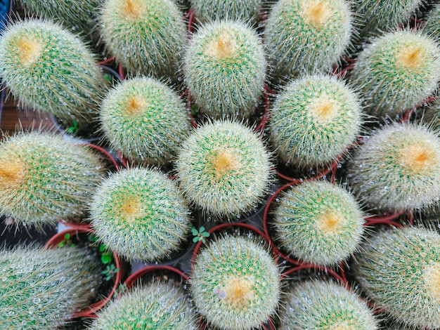 Cactus plant leaves pattern