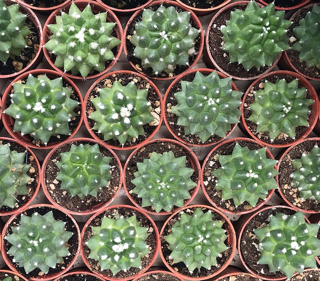 선인장 식물 잎 나무 패턴