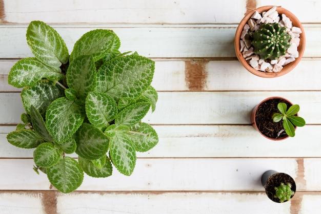 木製の上面の背景に粘土の植木鉢にサボテンの植物