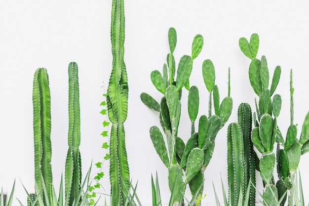 Кактус на белой стене в современном домашнем интерьере зеленая ботаника украшение фон природы