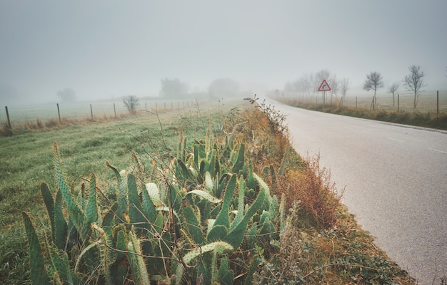 秋の霧のある風景の中の特徴的なスパイクまたは棘を持つサボテン植物のシャベル