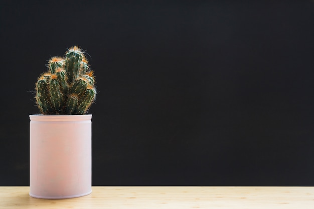 Cactus plant in white container on table against black backdrop