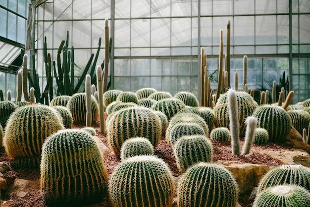 植物園に植え付けられたサボテンダークトーンとヴィンテージ