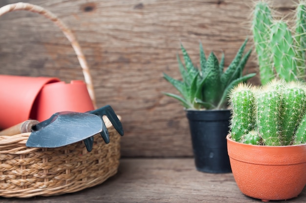 선인장 식물과 나무 배경에 바구니에 정원 도구
