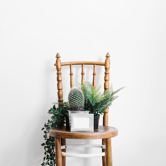 Cactus and plants on chair