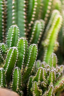 Cactus plants outdoors,copy space.