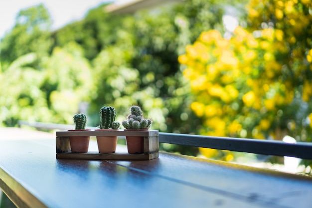 The cactus in the plastic pot put in a wooden stand placed on a wooden table with tree and sky for background