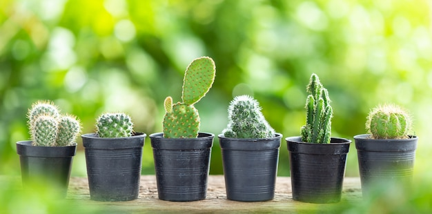 Cactus in plastic pot on wooden table with green nature blur background