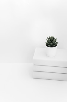 Cactus pot on book stacked against white backdrop