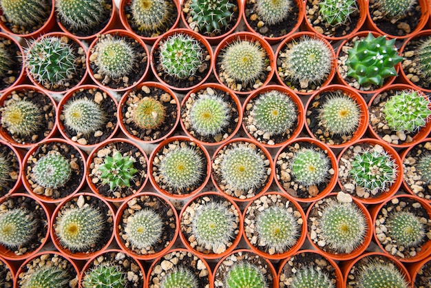 Cactus pot decorate in the garden / various types beautiful cactus market or cactus farm