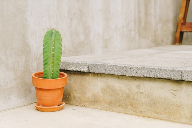 Cactus in pot decoration on stairs