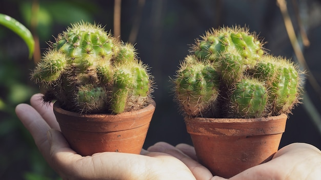 Cactus in a pot on the hand