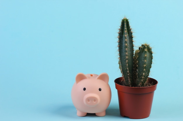 Cactus in pot and piggy bank on blue studio