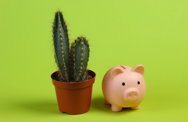 Cactus in pot and piggy bank on green studio