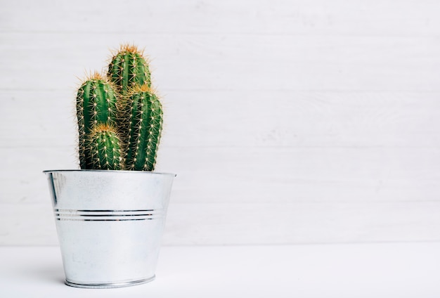 Cactus pot plant against wooden background