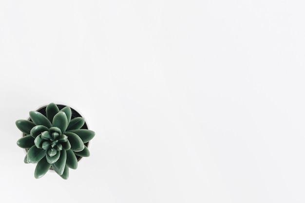 Cactus pot plant on white background