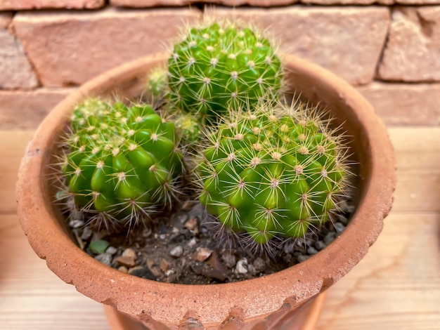 Cactus in pot on shelf for the home decoration