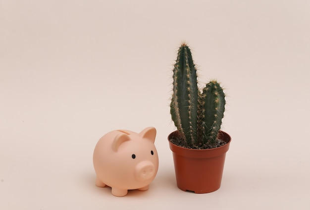Cactus in pot with piggy bank on beige background