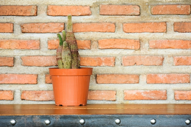 Cactus in a pot on wood desk