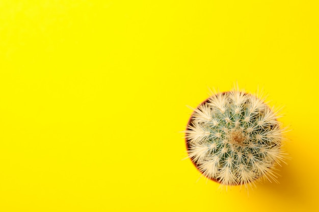 Cactus in pot on yellow surface