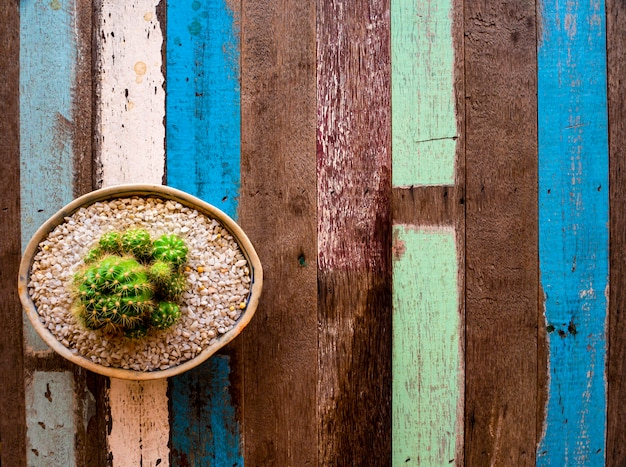 A cactus potted on a colorful wooden table