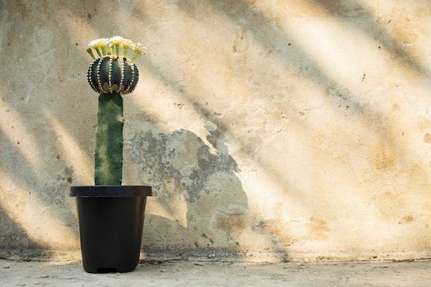 サボテン鉢植え植物セメント壁コピースペース背景