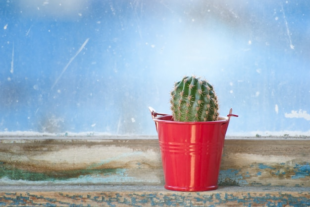 Cactus in red pot on vintage window
