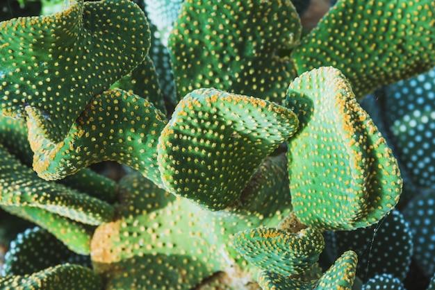 Cactus species
