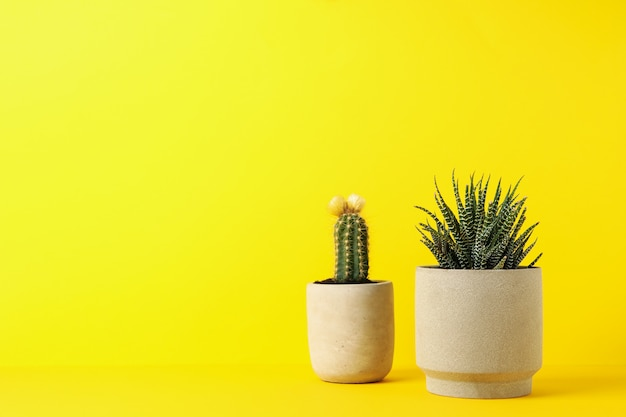 Cactus and succulent plant on yellow background, space for text