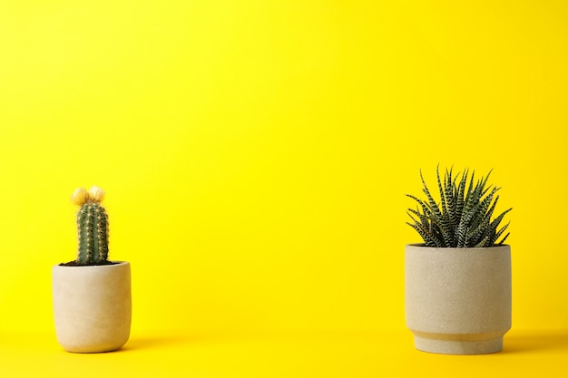 Cactus and succulent plant on yellow surface
