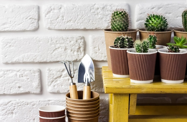 Cactus and succulent plants collection in paper cups on small yellow table
