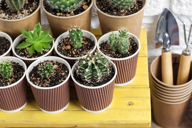Cactus and succulent plants collection in paper cups