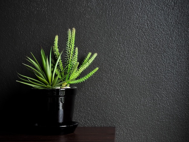 Cactus and succulent plants with gravels in black ceramic pot on wooden table on dark