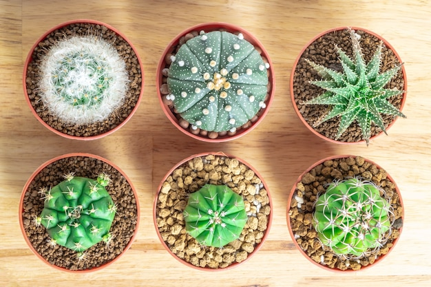 Cactus or succulents in the pot on the wooden office table background