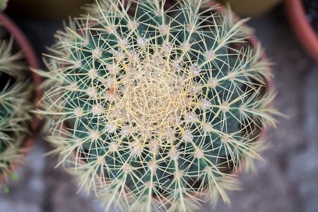 Cactus, succulents, thorns, close-up wallpaper, houseplant