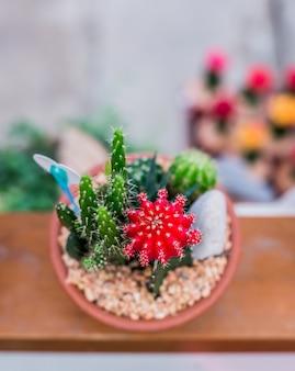 サボテン、砂糖椰子の葉、庭の装飾