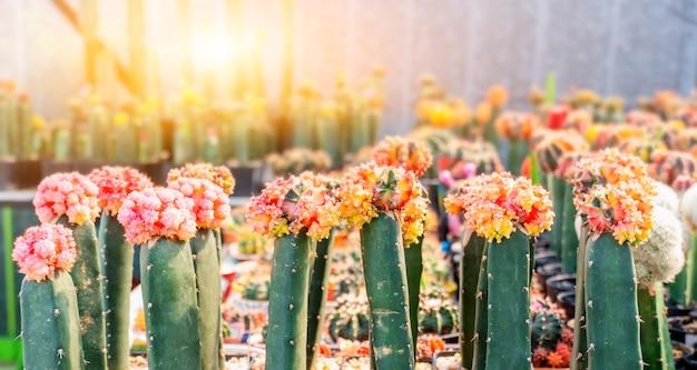 サボテン、装飾用の砂糖ヤシの葉、庭の植物や木