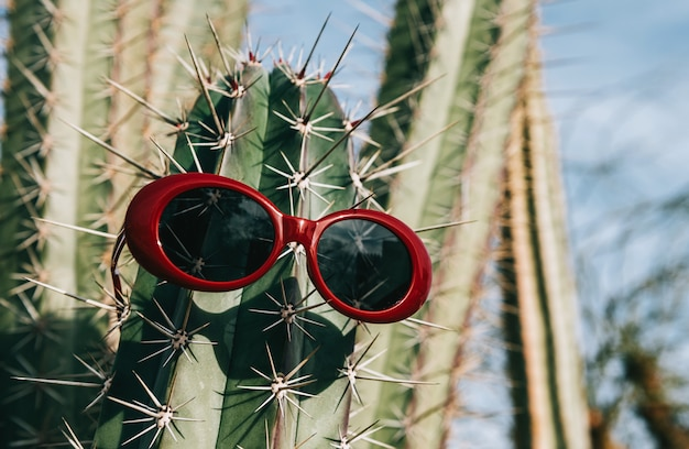 Cactus in sunglasses on a light background