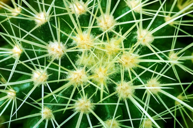Cactus texture background closeup image