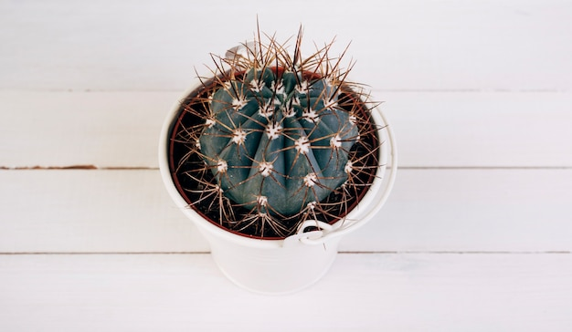 Cactus thorny plant in white bucket on wooden desk