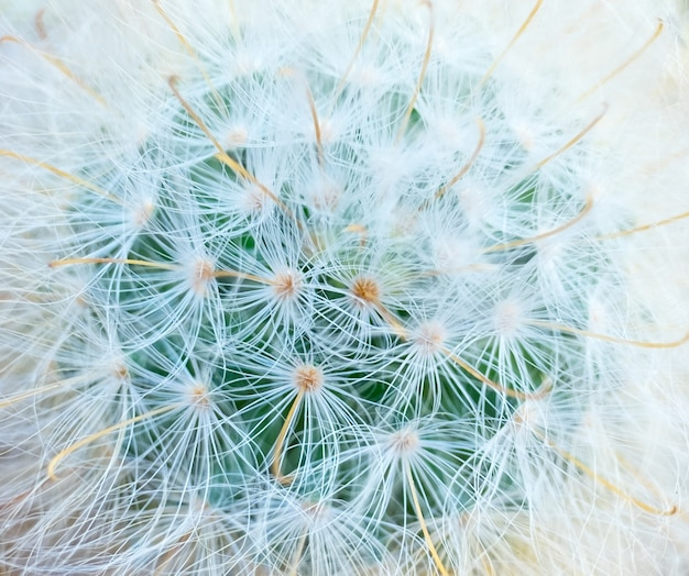 Cactus top view shooting macro detail skin and fur soft and stick network
