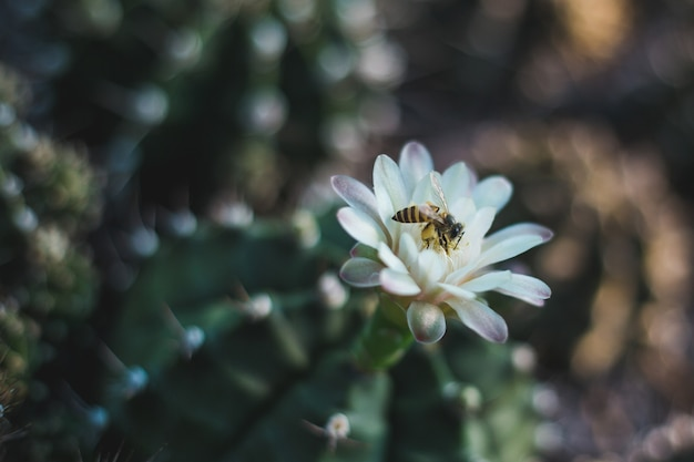 Cactus tree closeup
