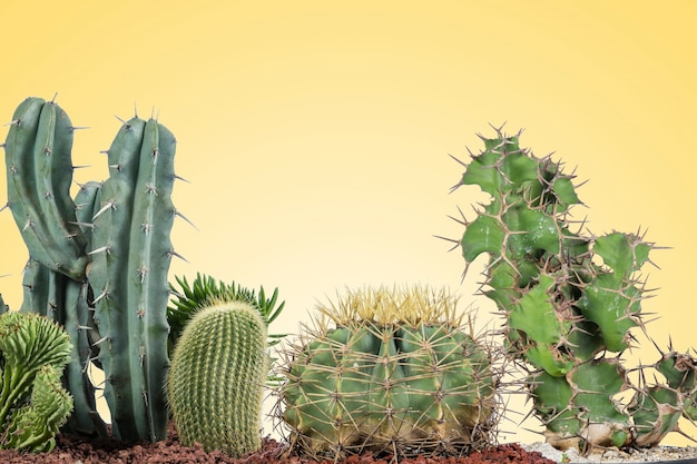 Cactus of various types with a yellow background