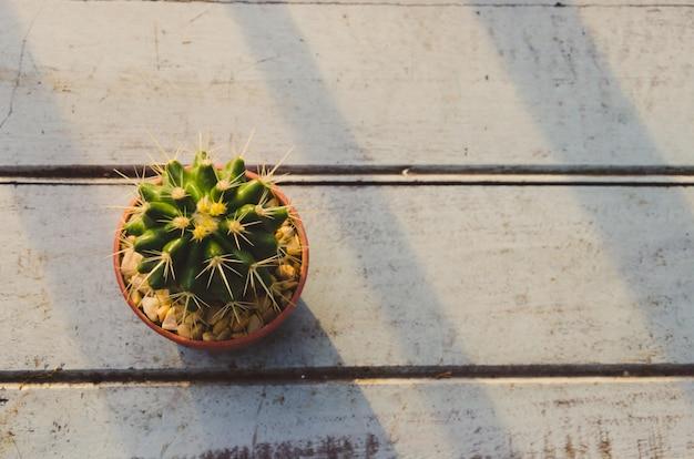 Cactus vintage tone