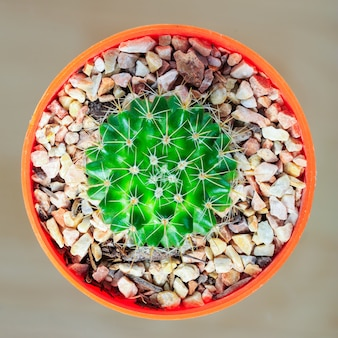 Cactus viwed from top, in a pot