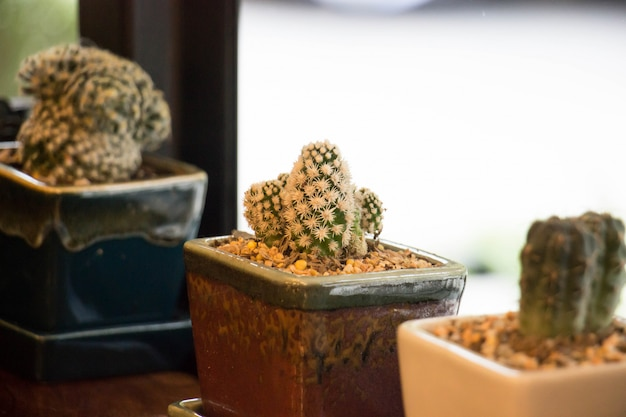 Cactus with coffee shop background