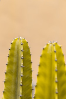 Cactus with sharp thorns